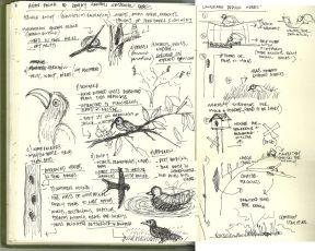 01b study of avian fauna ecology of mumbai